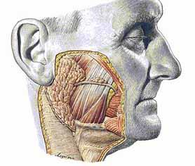 hoofdpijn links boven
